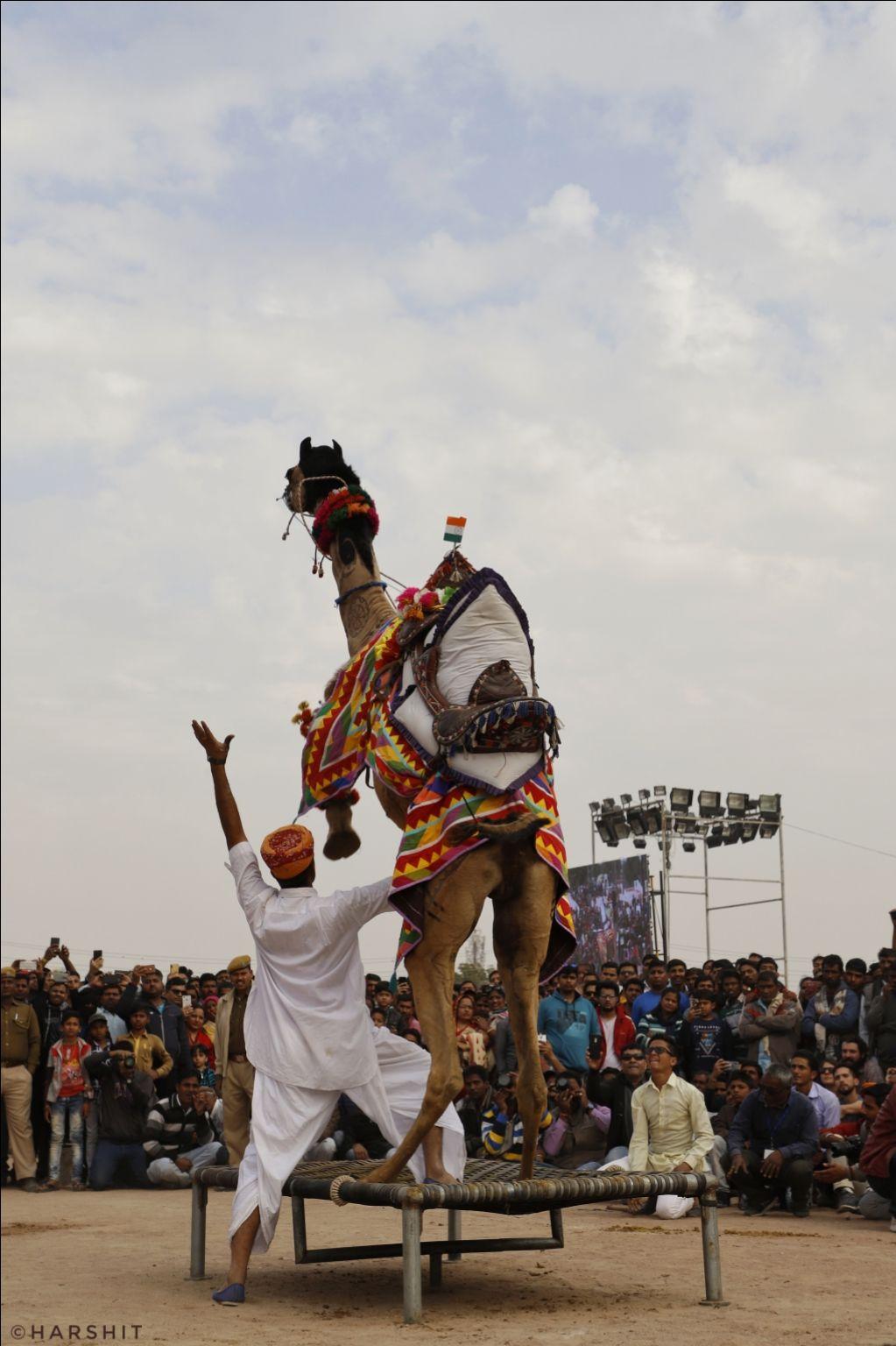 Photo of Bikaner By Harshit Chandak