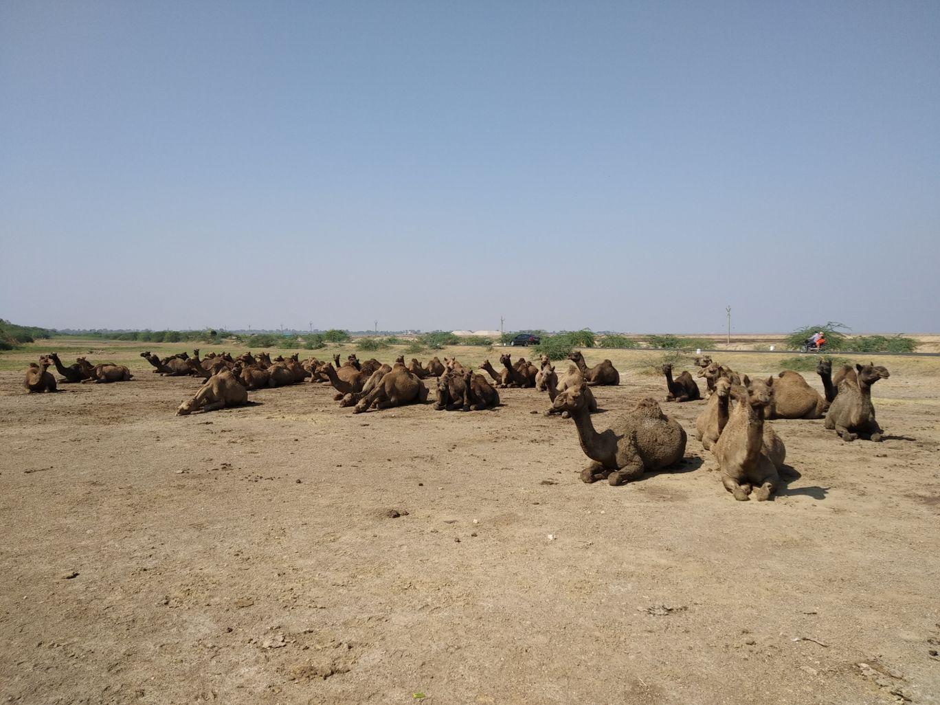 Photo of Koliyak Beach By amul joshi