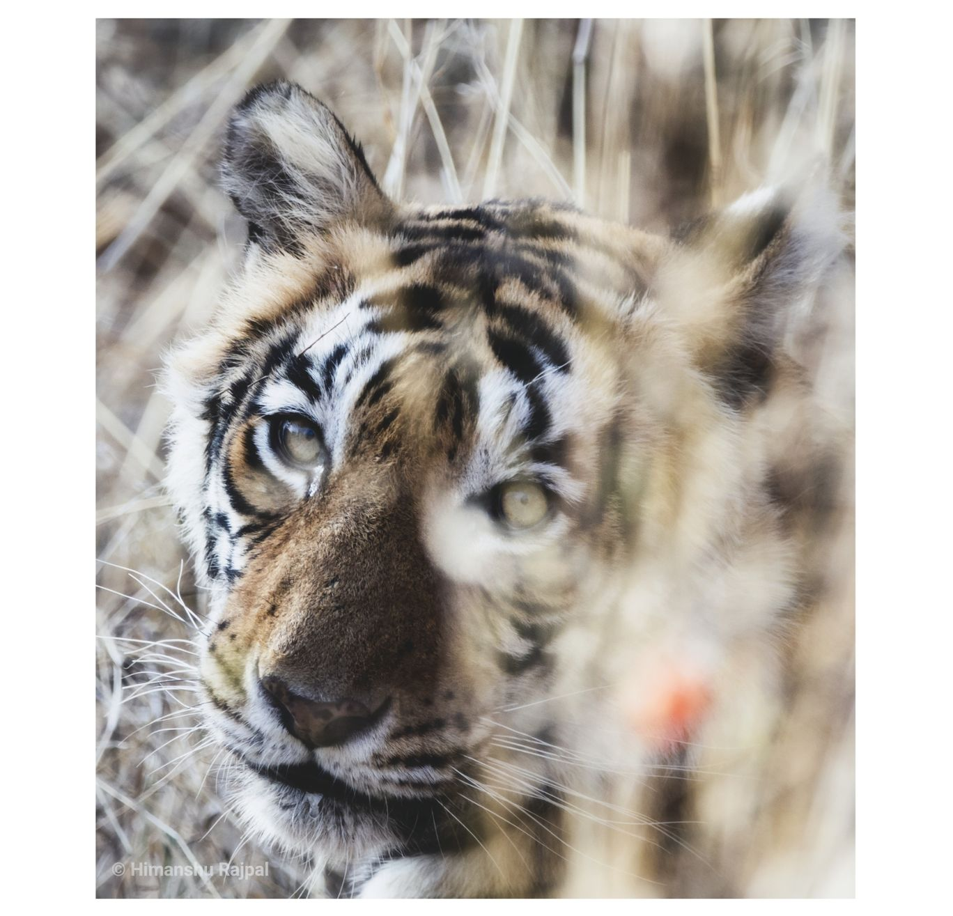 Photo of Ranthambore National Park By Himanshu Rajpal