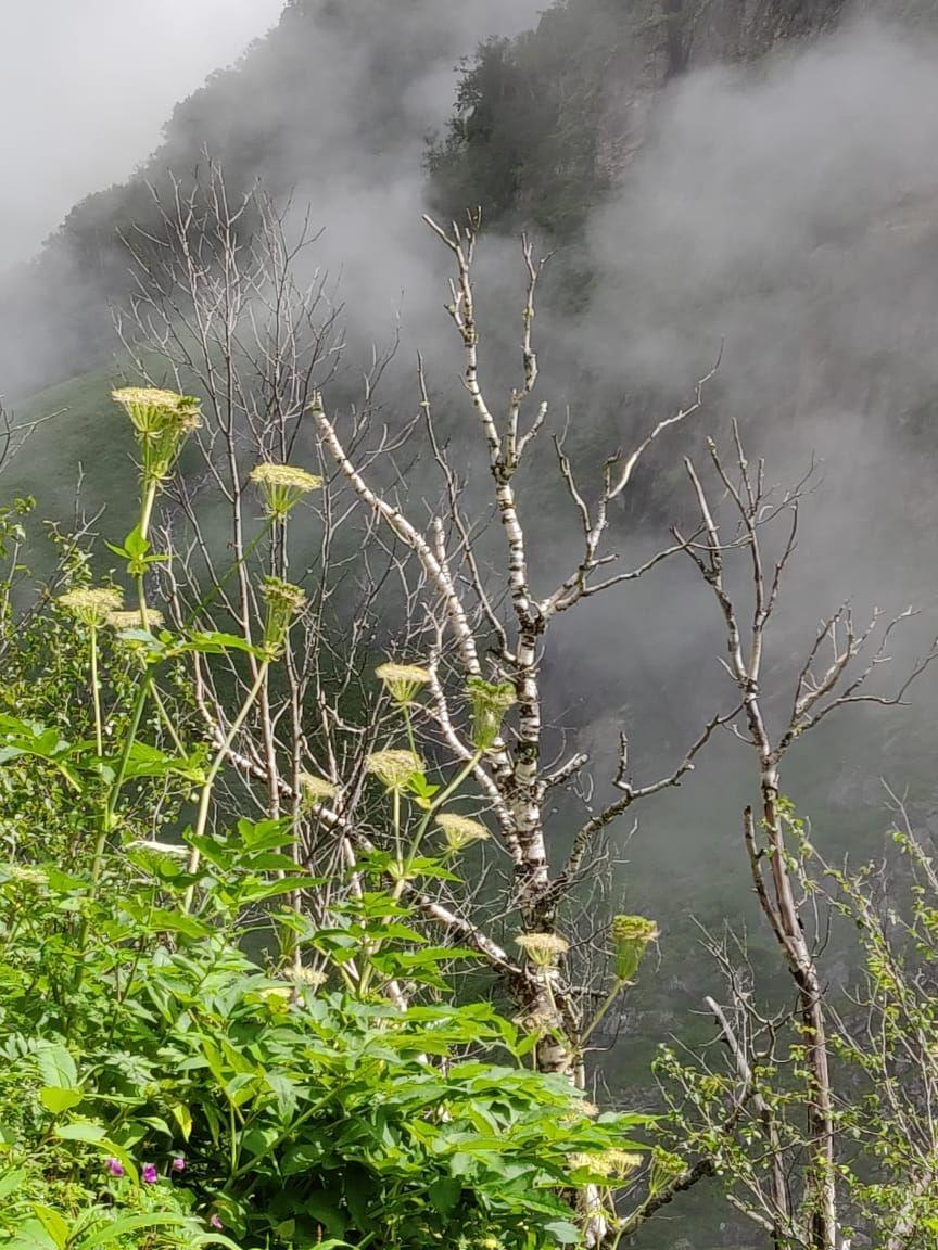 Photo of Valley of Flowers National Park By Leena Goel