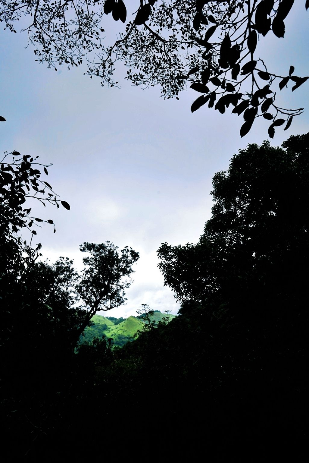 Photo of Wayanad By vaishak