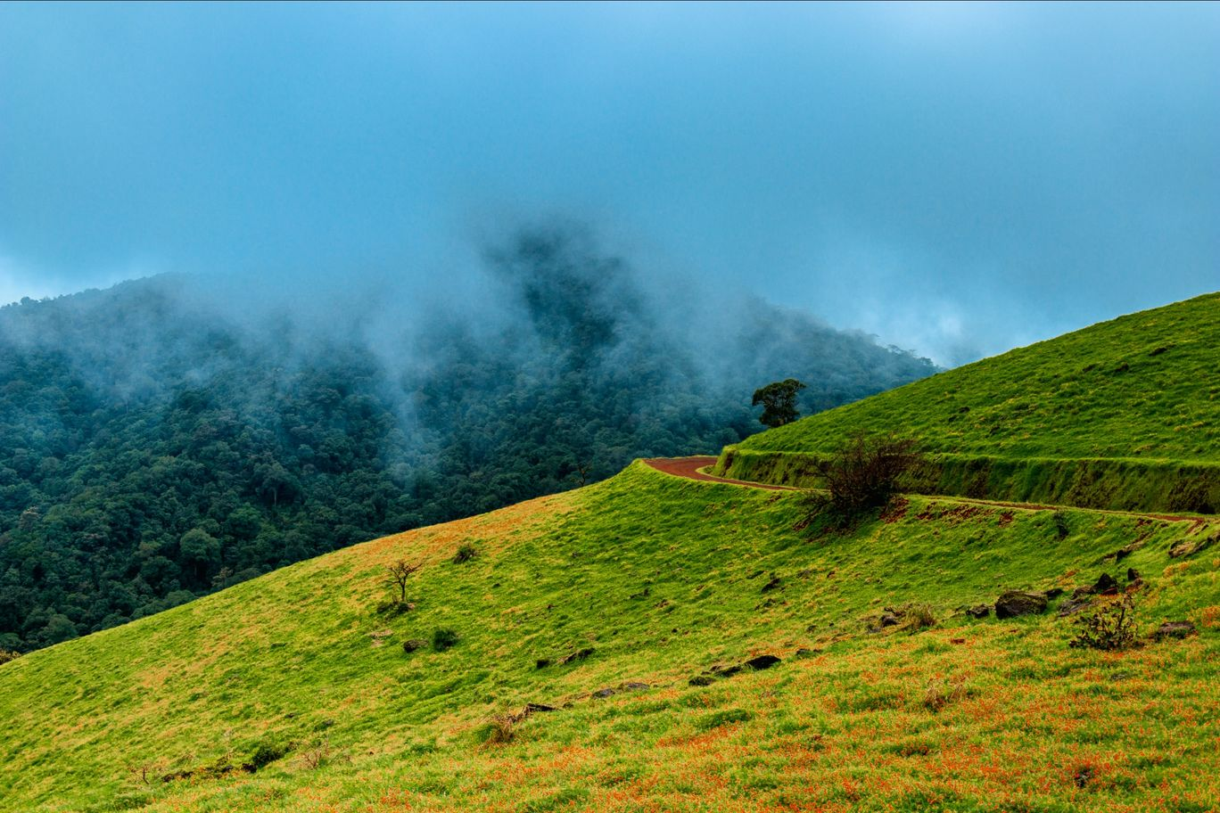 Photo of Kodachadri Trek Trail By Abhijit Dange
