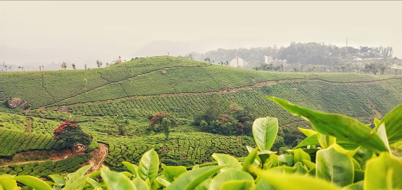Photo of Munnar By Hazeem Hamza