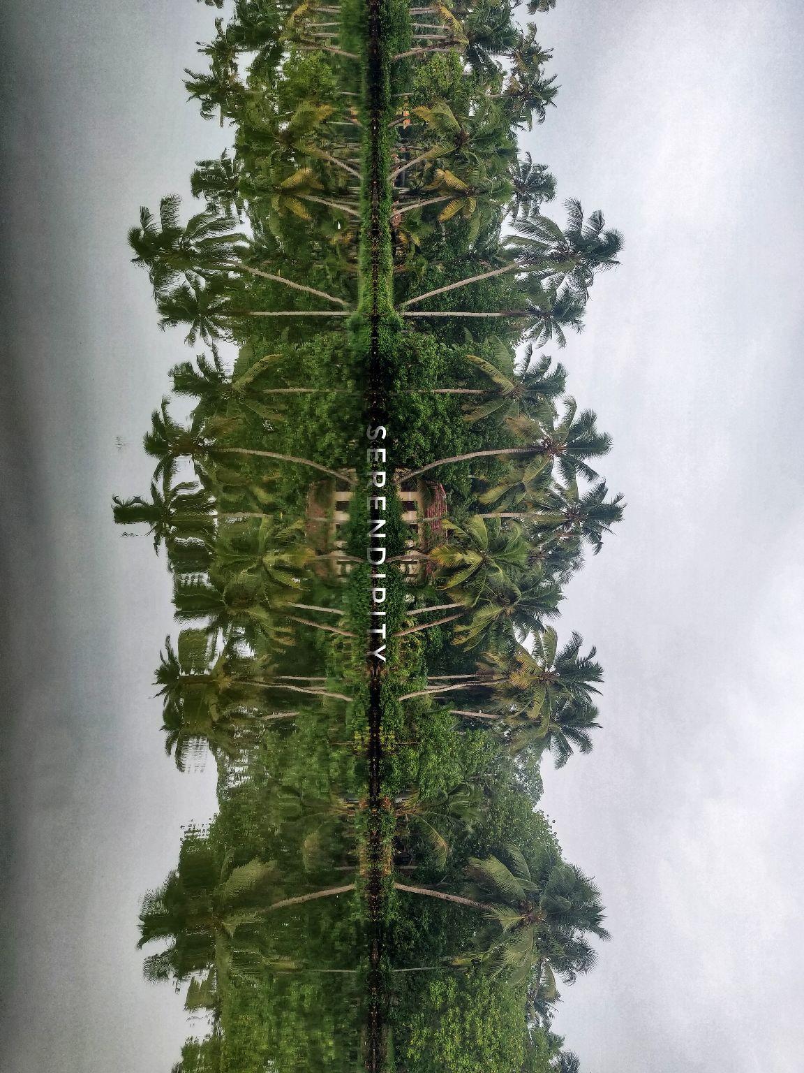 Photo of Pichavaram Mangrove Forest By onetallgirl.onejourney
