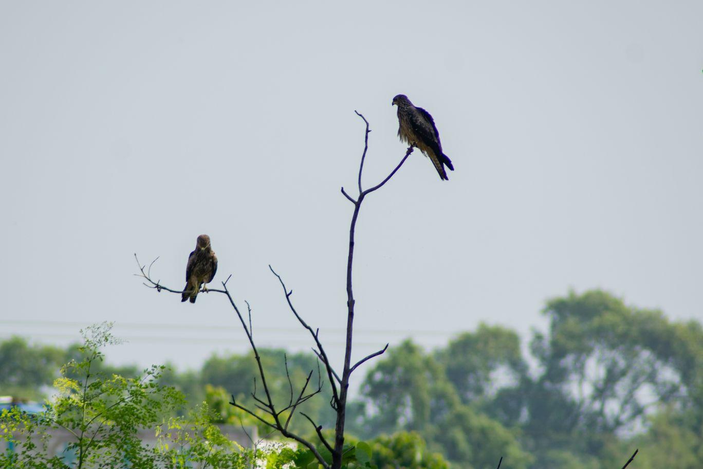 Photo of Jharkhand By Minhaj Khan