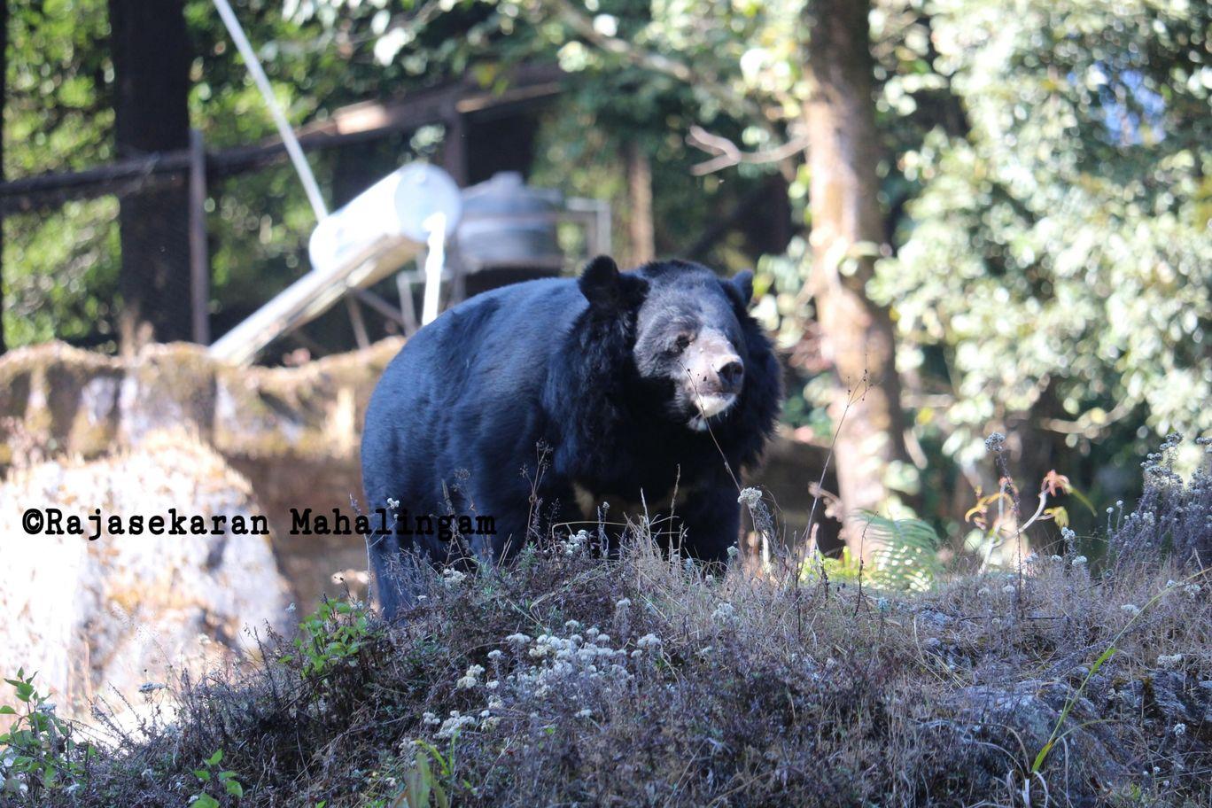 Photo of Darjeeling By Rajasekaran Mahalingam