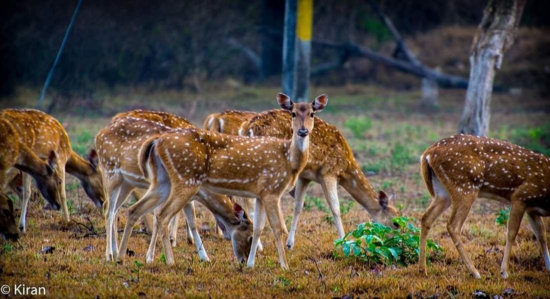 Photo of Masinagudi By Kiran Ravi