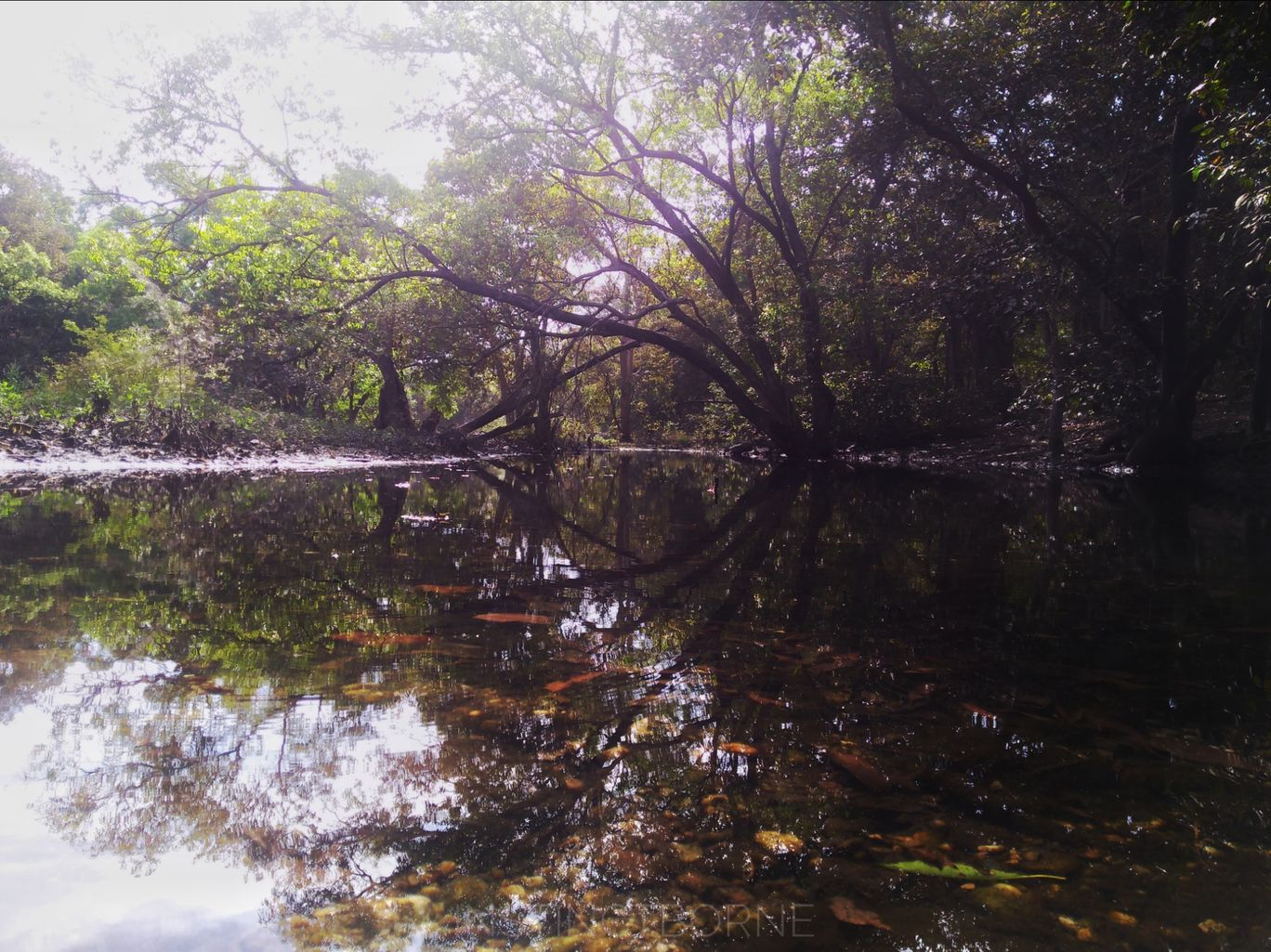 Photo of Polo Forest By Maitreya