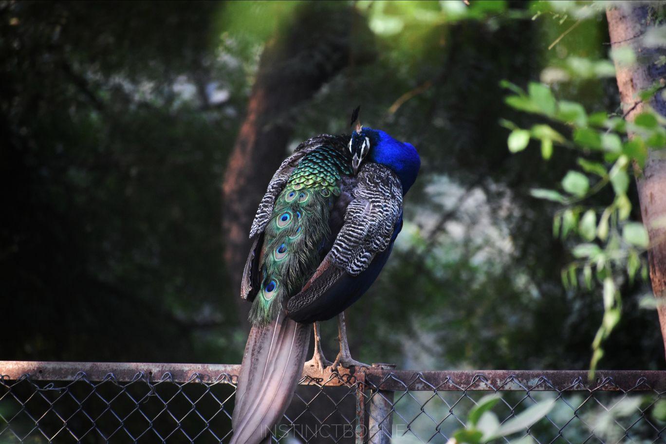 Photo of Indroda Nature Park By Maitreya