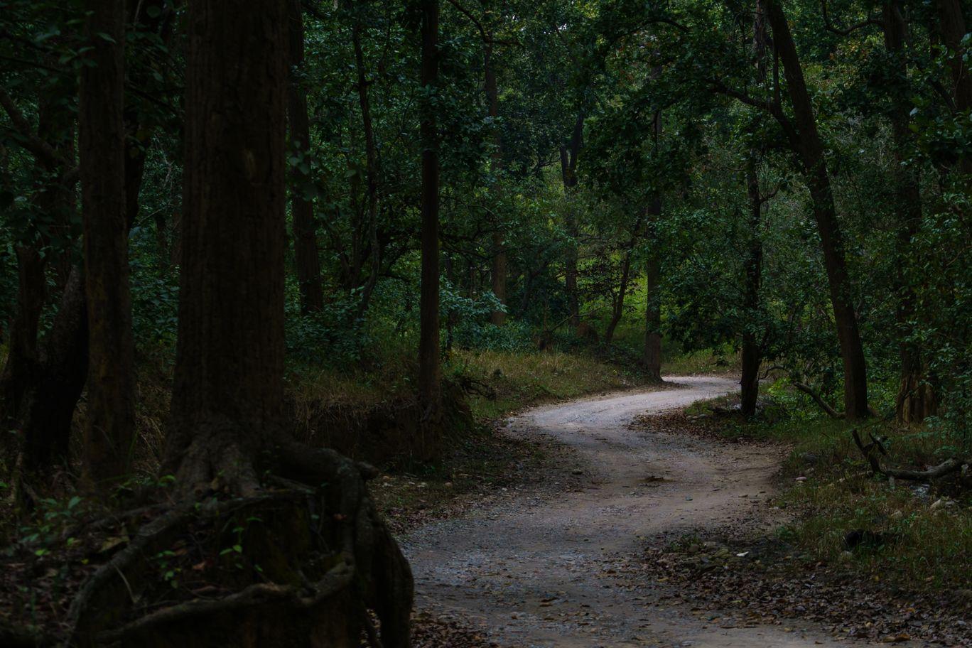 Photo of Jim Corbett National Park By Sandeep Sreedhar