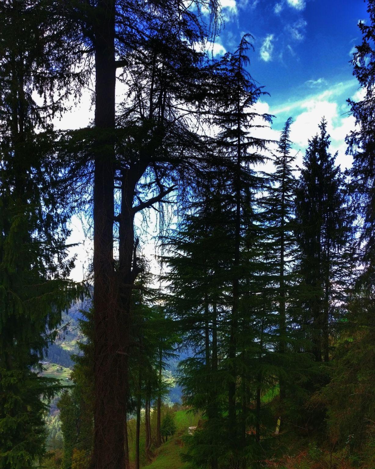 Photo of Tirthan Valley By amit gupta