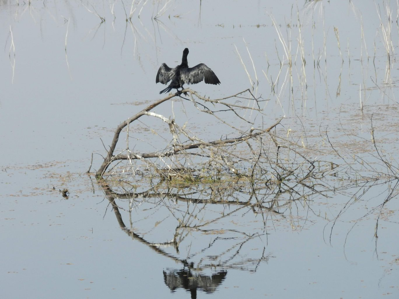 Photo of Bharatpur Bird Sanctuary By ROHIT BHARDWAJ