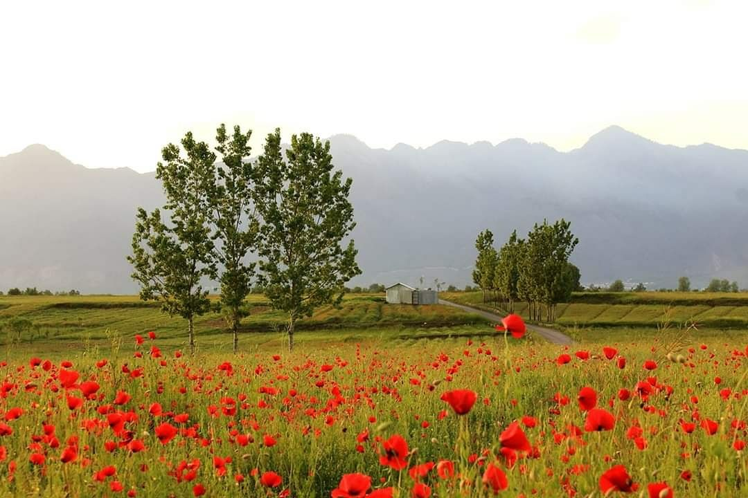Photo of Srinagar By Malik Mehrooz