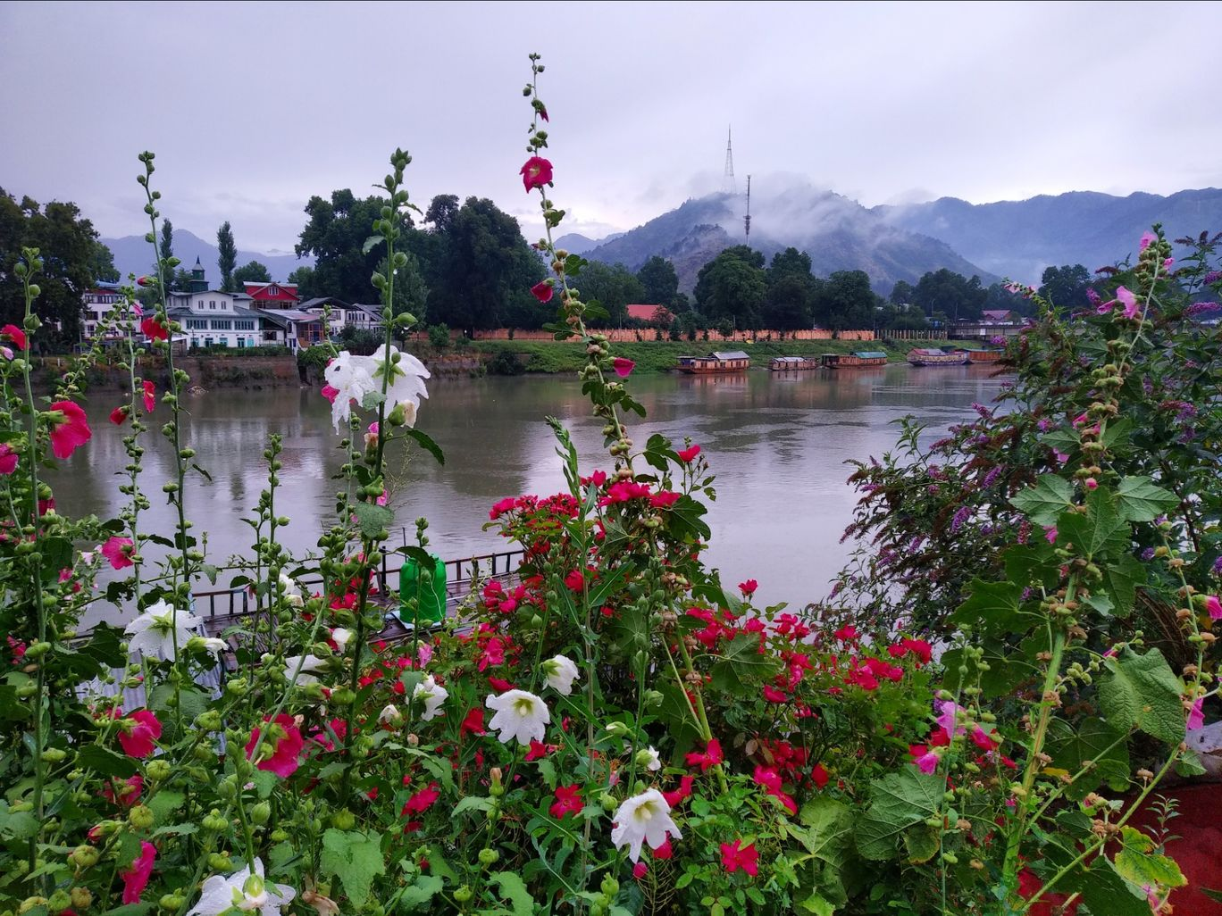 Photo of Dal Lake By Malik Mehrooz