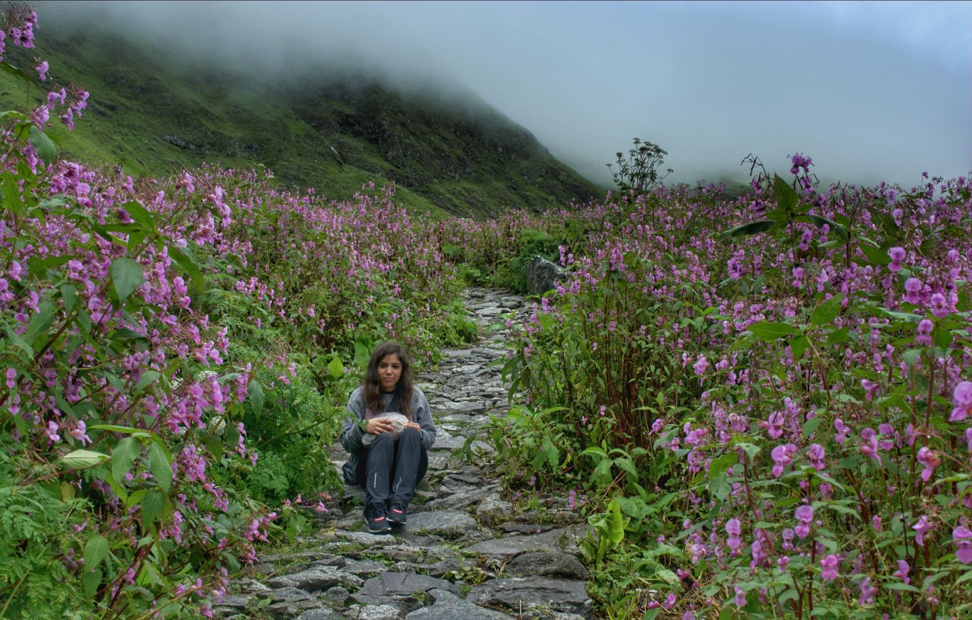 Photo of Valley of Flowers National Park By Nupur Rawat