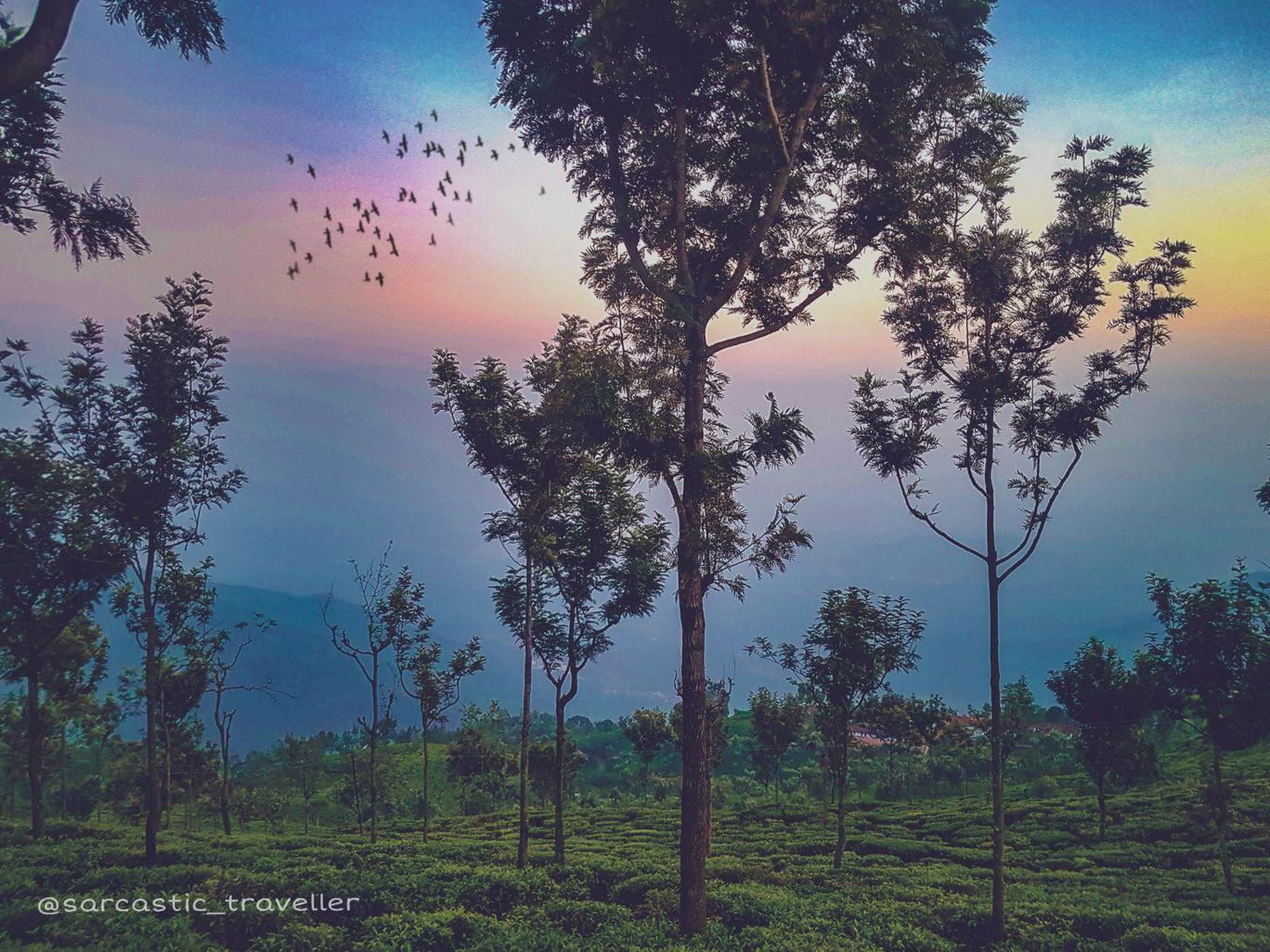 Photo of Coonoor Tea Estate By Aniket Kalhans