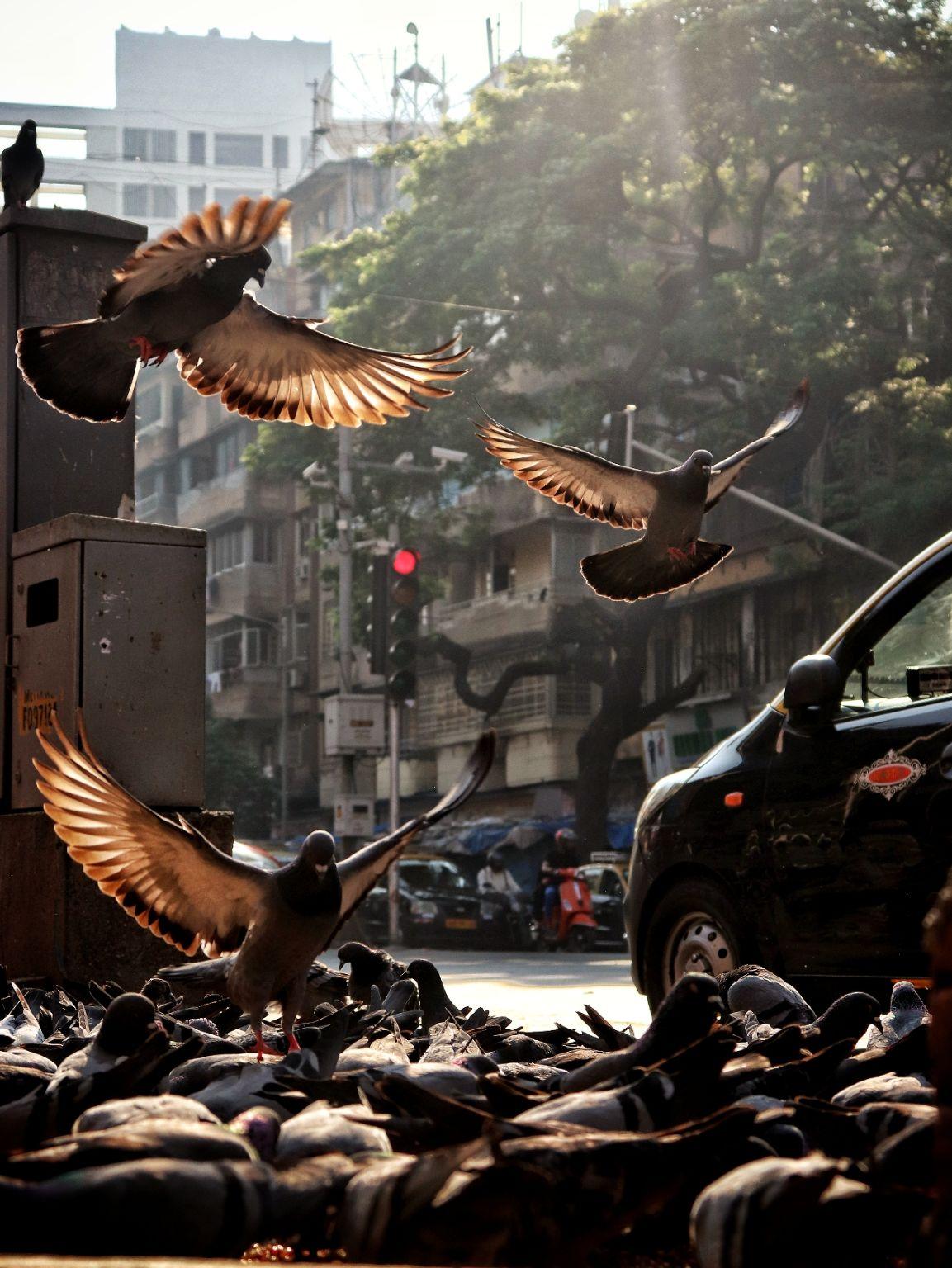 Photo of Mumbai By Kaushal Shatija