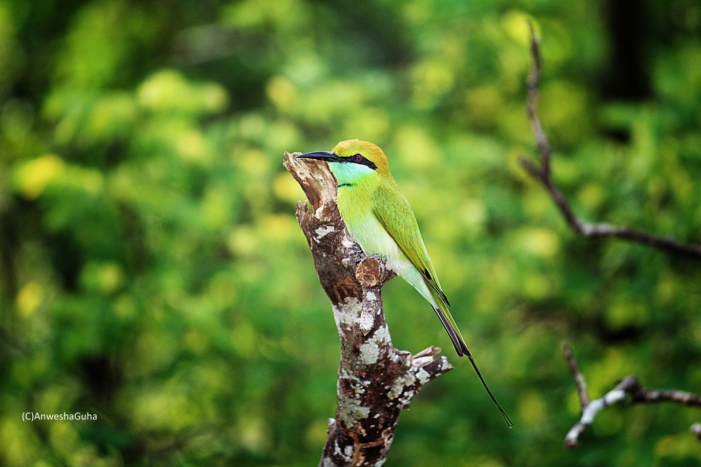 Photo of Masinagudi By Anwesha Guha