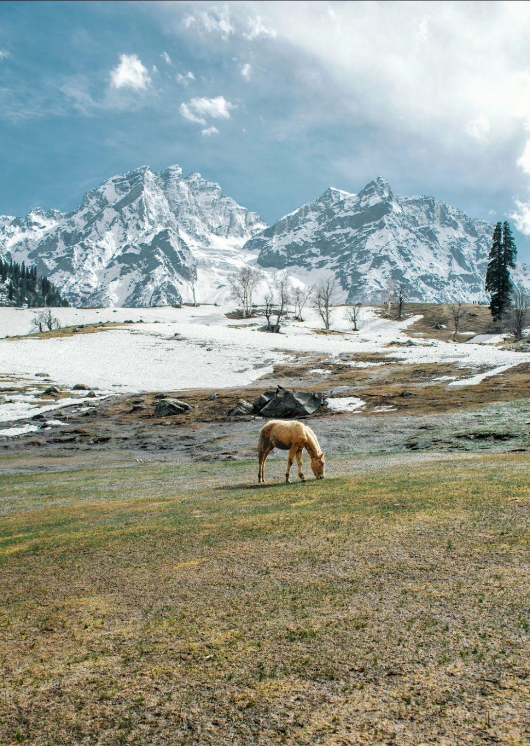 Photo of Thajiwas glacier By Shah Shais