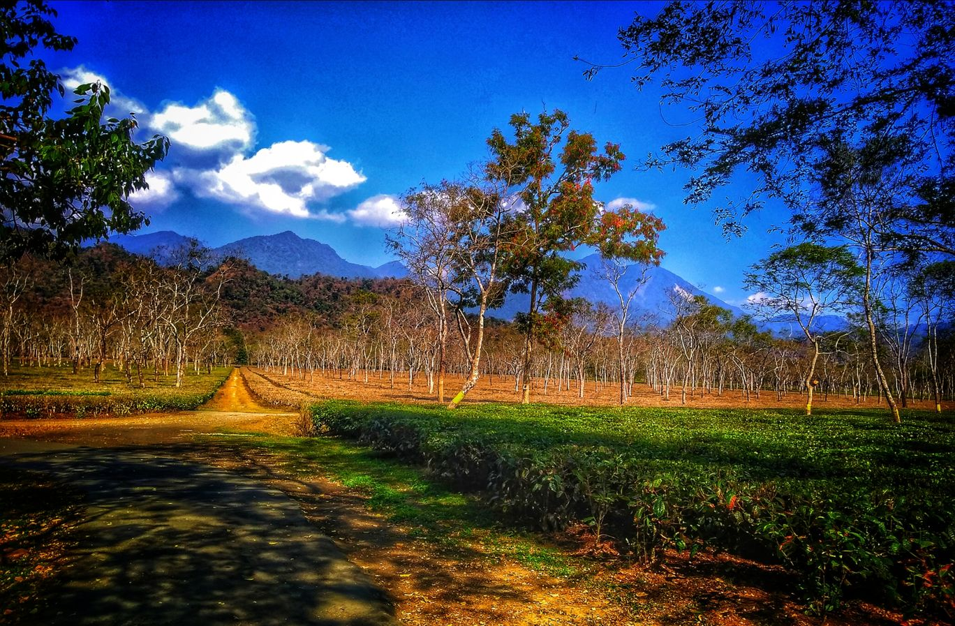 Photo of Corramore Tea Estate By Koushik medhi