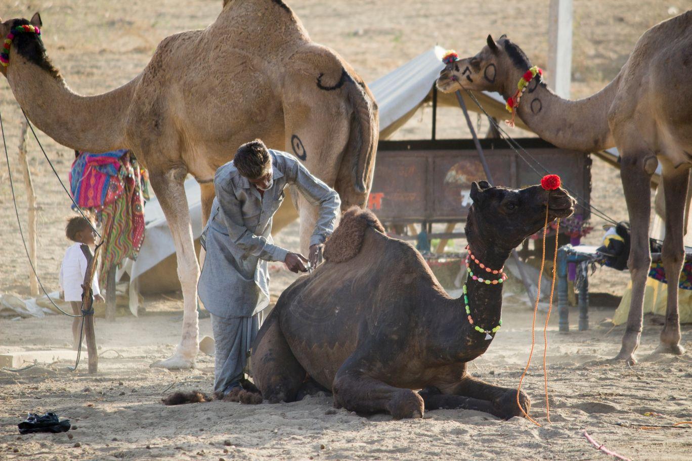 Photo of Rajasthan By Brijesh Dhobi
