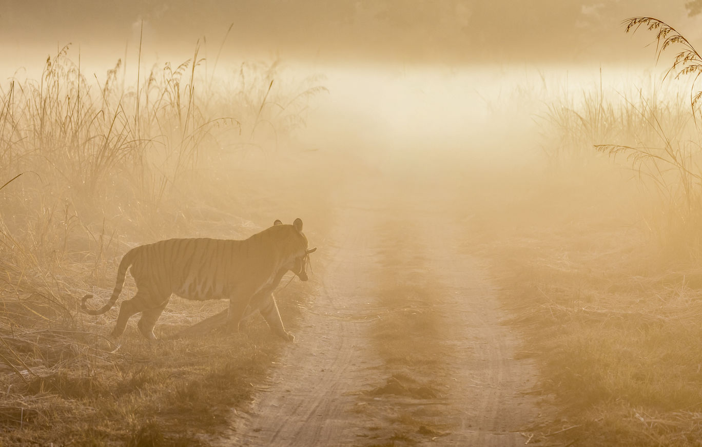 Photo of Jim Corbett National Park By Ankit Shukla