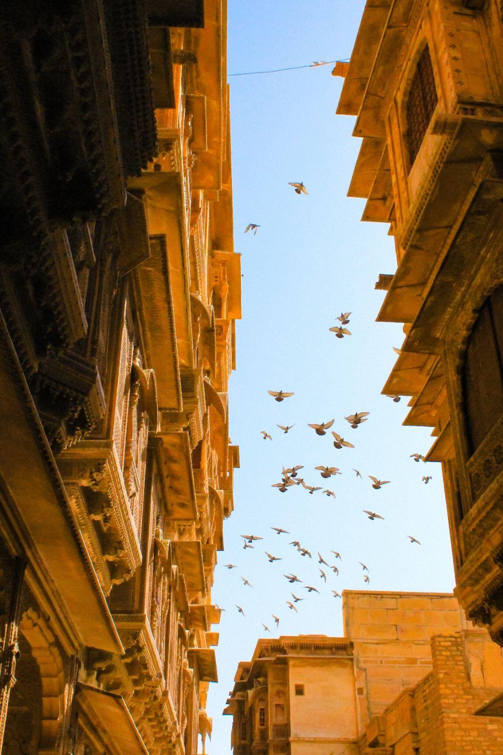 Photo of Rajasthan By Vishal Khomane