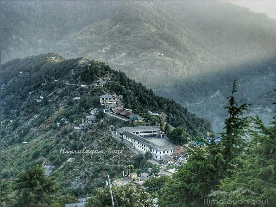 Photo of Bhanjraru By Himalayan soul