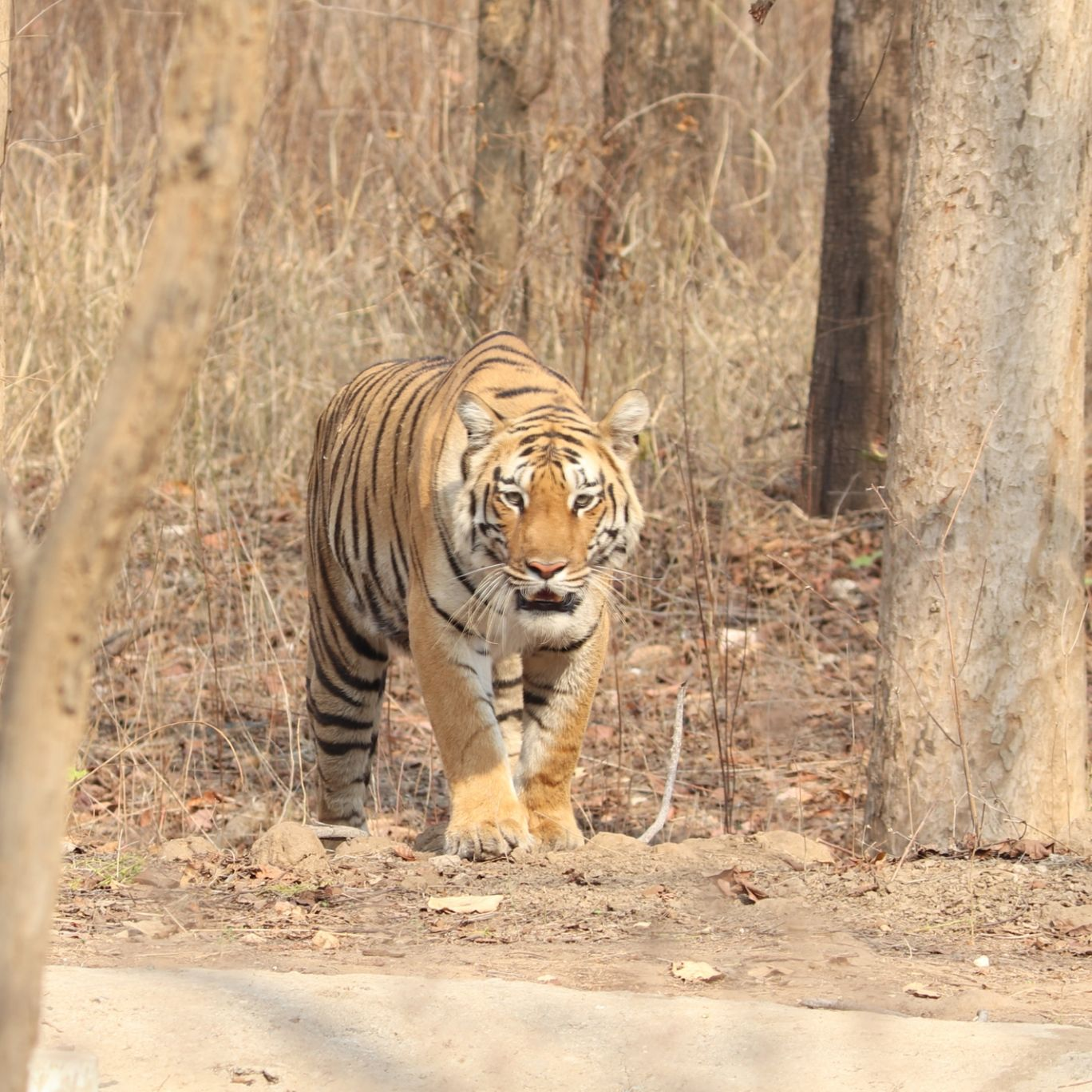 Photo of Pench Tiger Reserve Gateway By Rahul Tawade