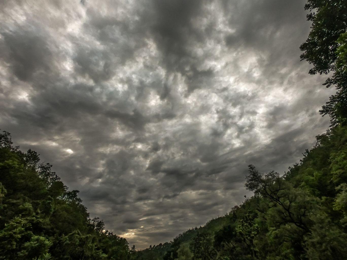 Photo of Gular By Puneet Garg