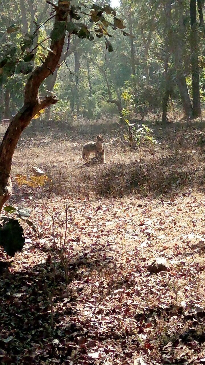 Photo of Bandhavgarh Tiger Reserve By Ruplal Jatav