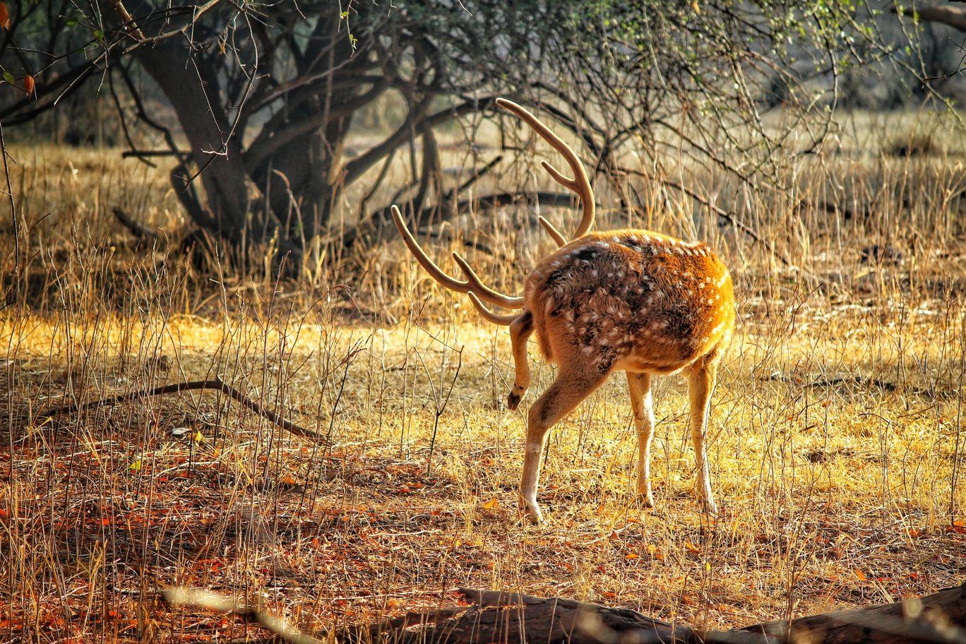 Photo of Sariska Tiger Reserve By Akshay Kumar Aggarwal