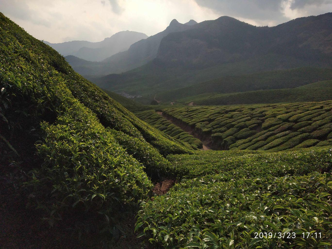 Photo of Kolukkumalai Tea Plantation By Praba Prakash