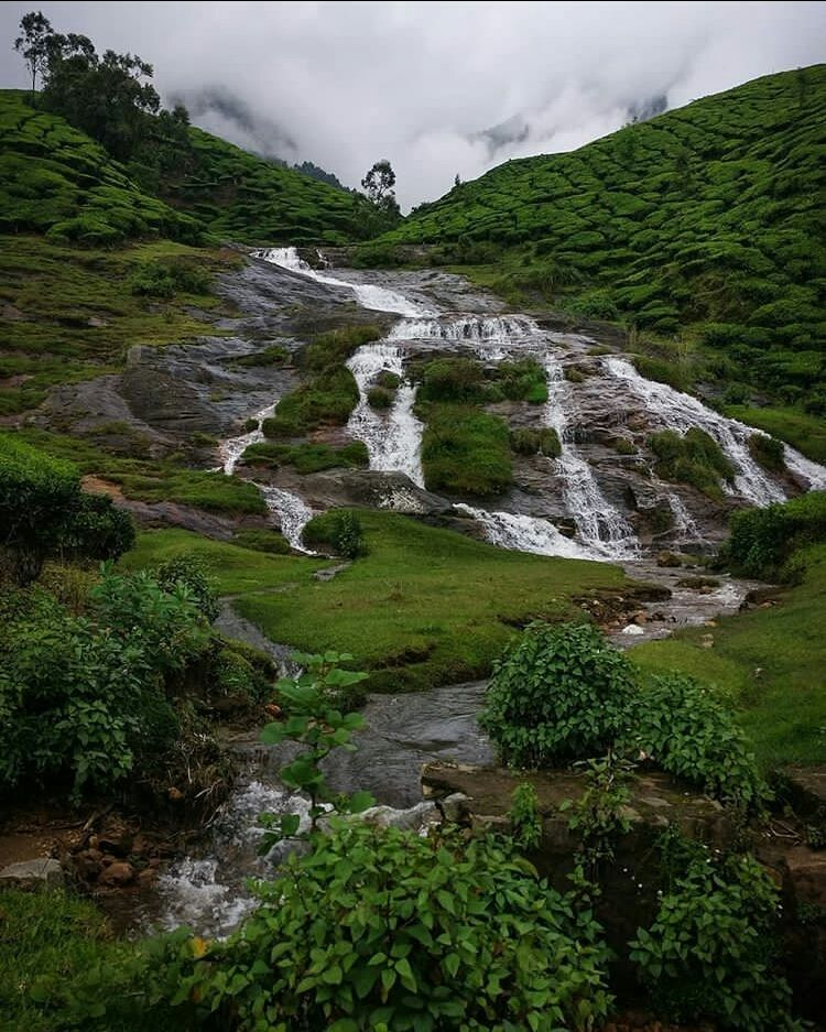 Photo of Suryanelli-Kolukkumalai Tea Estate Road By trippieeee_traveller