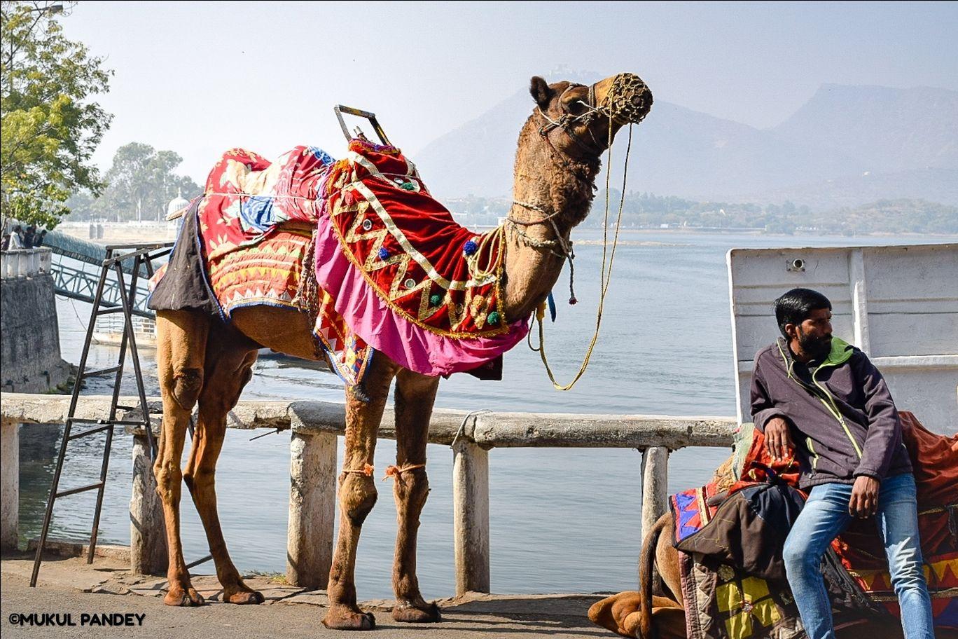 Photo of Jaipur By Mukul Pandey