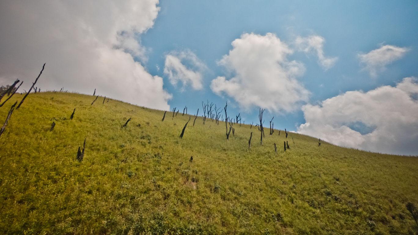 Photo of Dzükou Valley By Aritra Sen