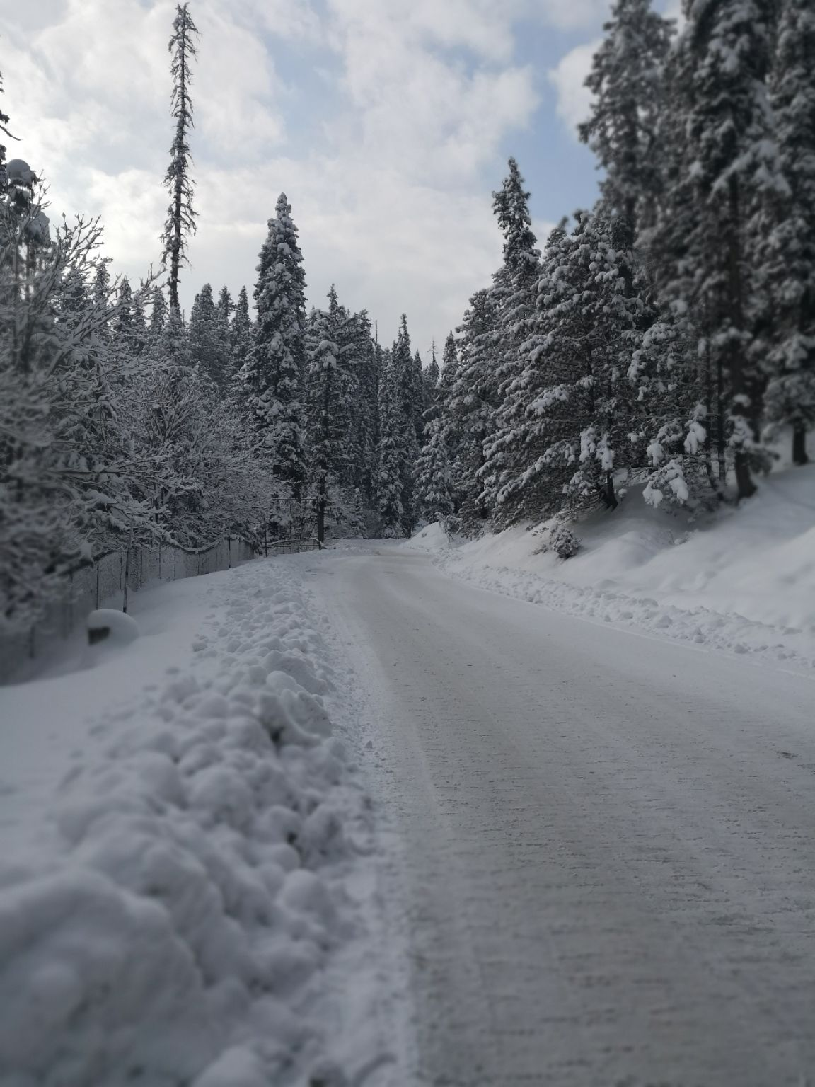 Photo of Khilanmarg Woods By Shruti Thomas