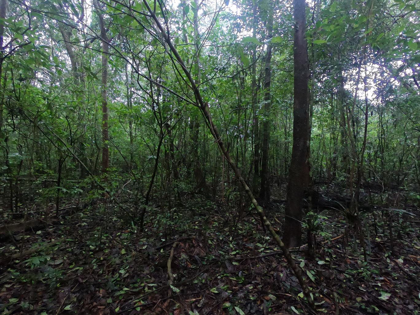 Photo of Someshwara Wildlife Sanctuary By Bhavya Joshi