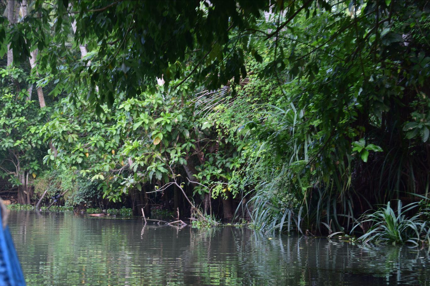 Photo of Kerala Backwaters By Kartik Sehgal
