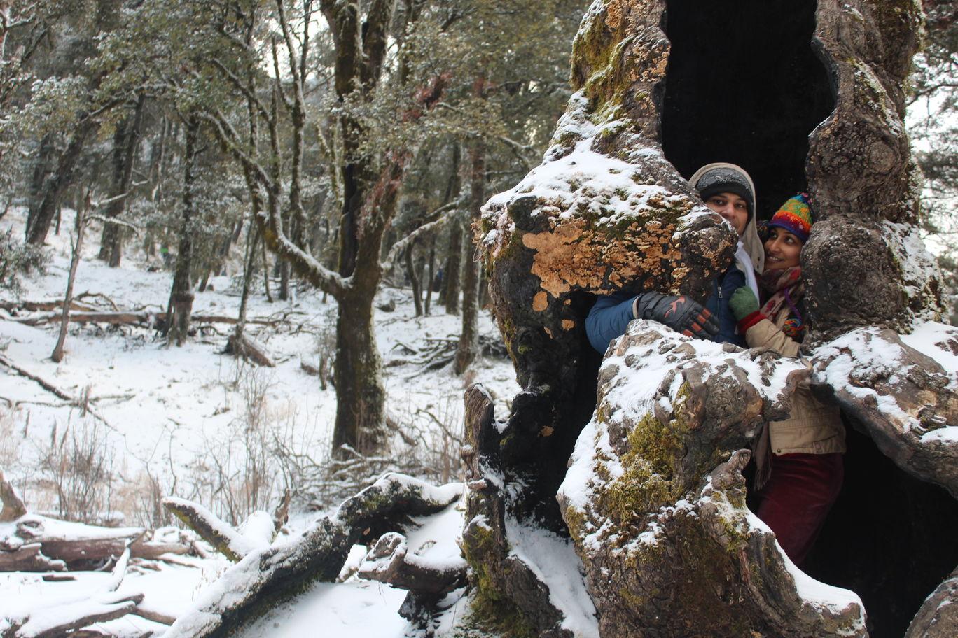 Photo of Nagtibba Trek/ Trekking By 2itchyfeets