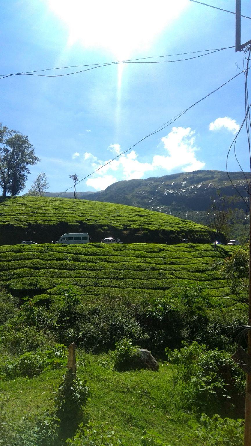 Photo of Munnar By Ankita_freebird