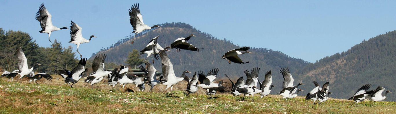 Photo of Bhutan By Sajan Rai