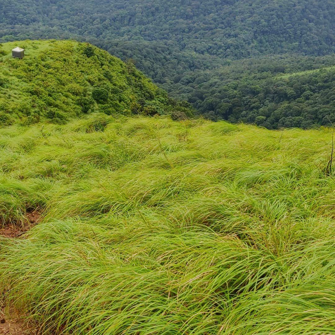 Photo of Brahmagiri By Ashwin G