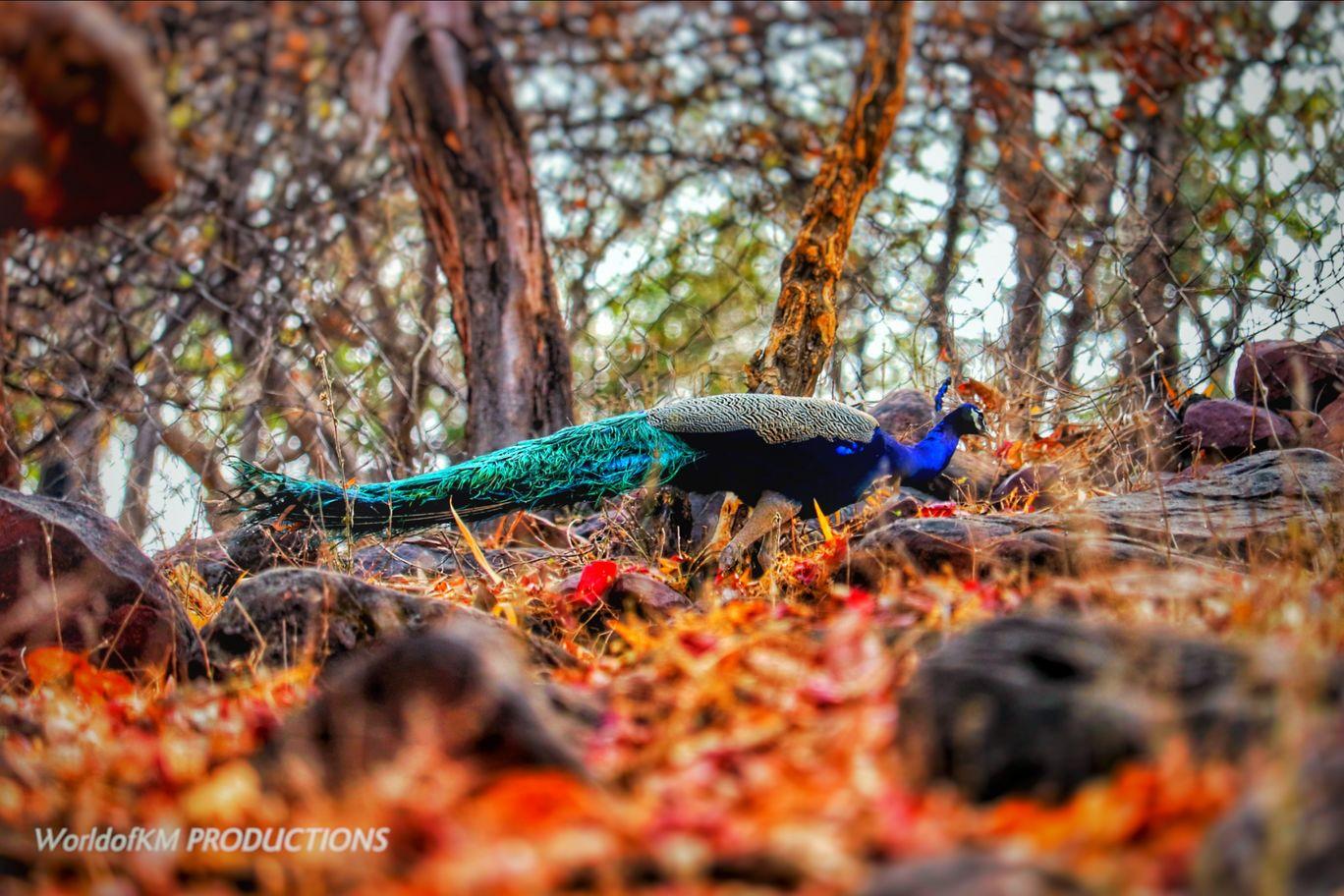 Photo of Van Vihar National Park By Kamlesh Mandriya