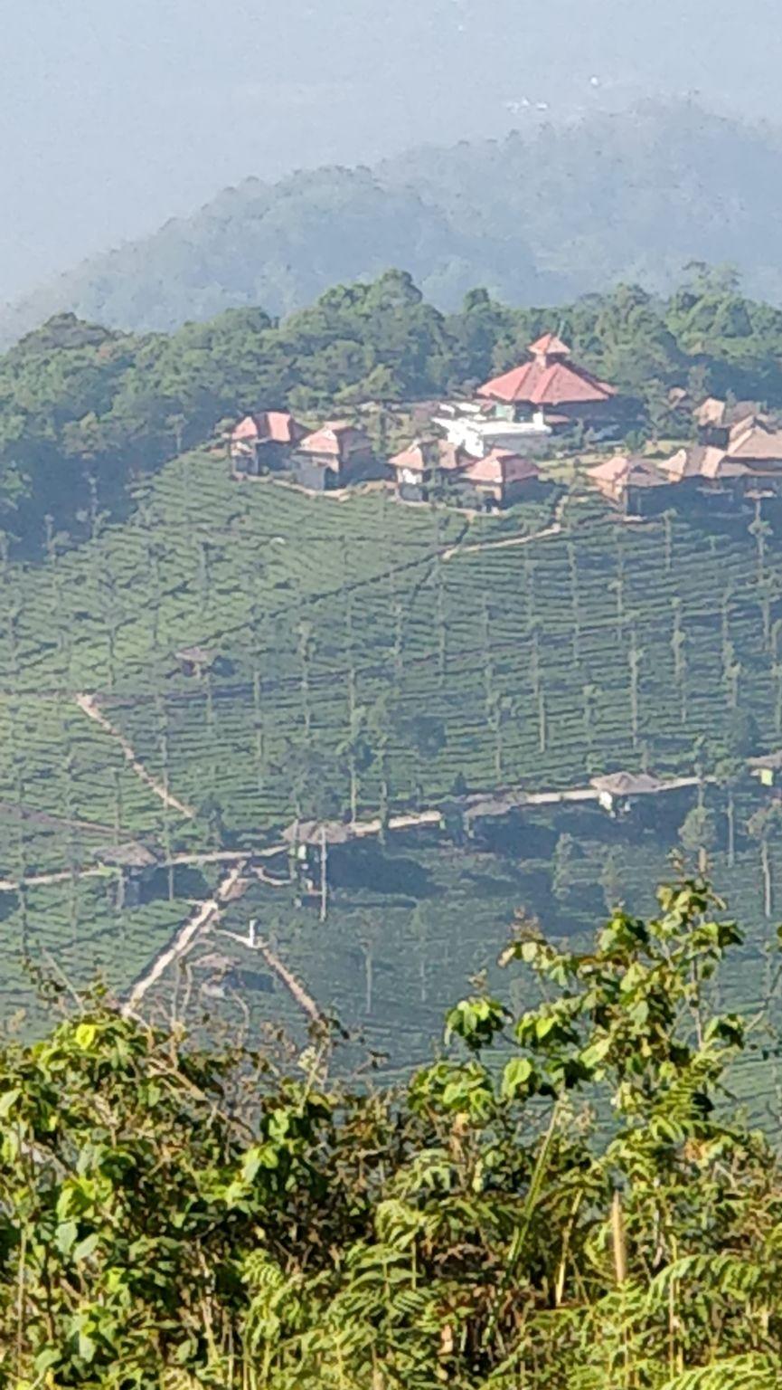 Photo of Wild Planet Jungle Resort By Ramraj