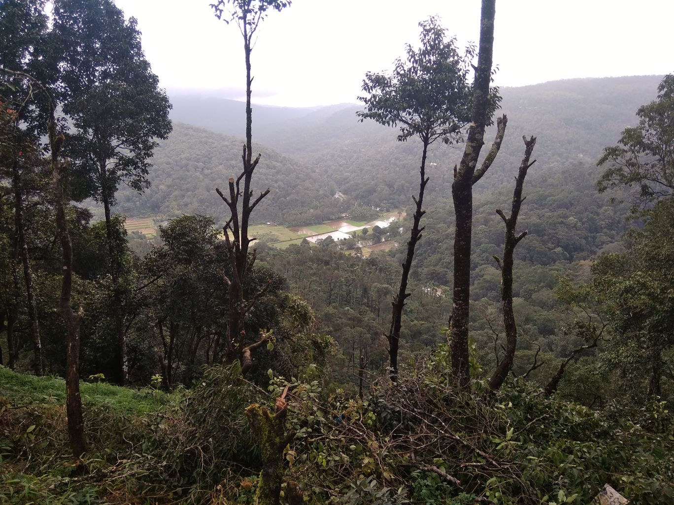 Photo of Coorg By ChaKrY Alone