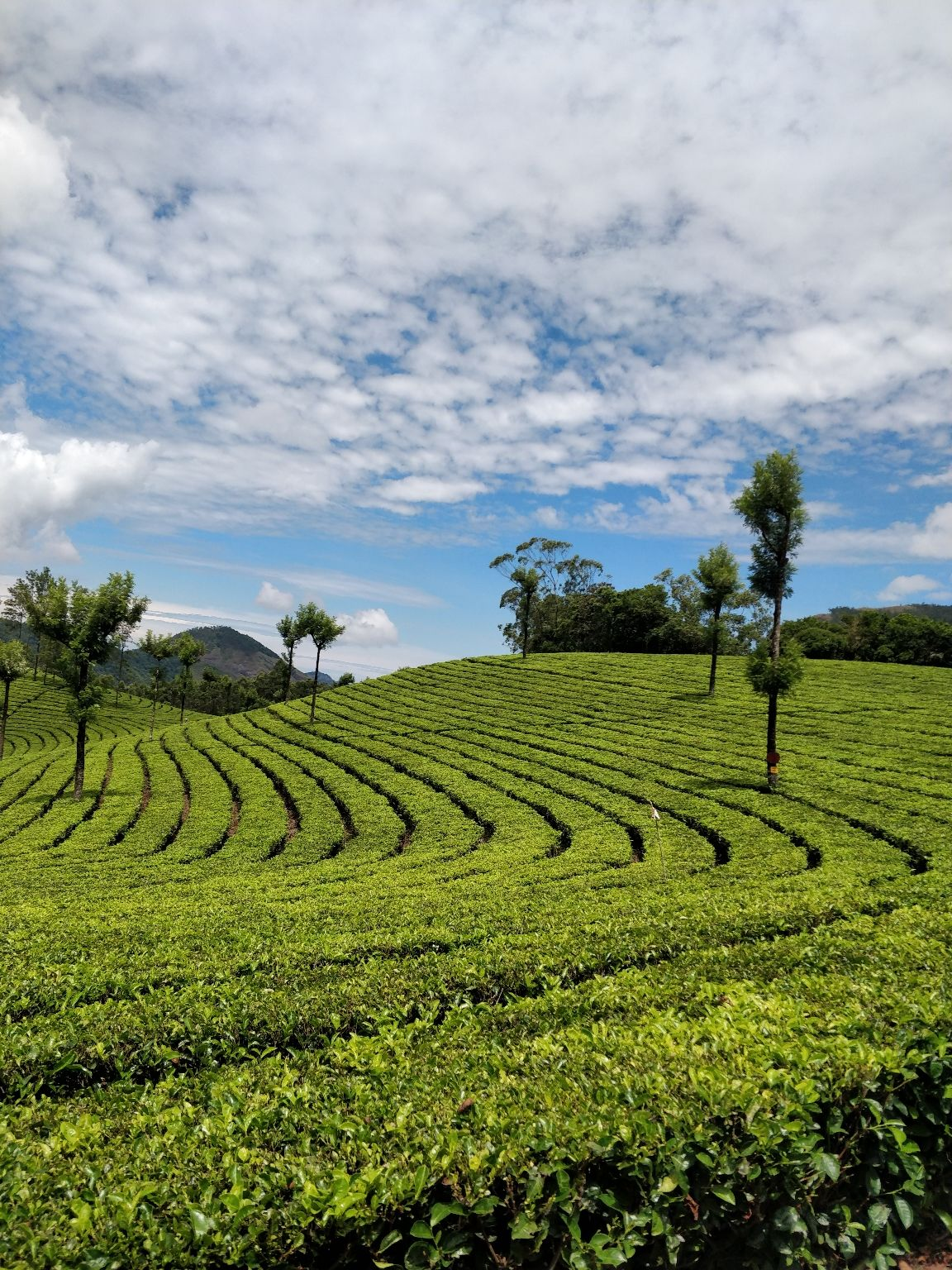 Photo of Munnar By Dr-Rutuja Gore