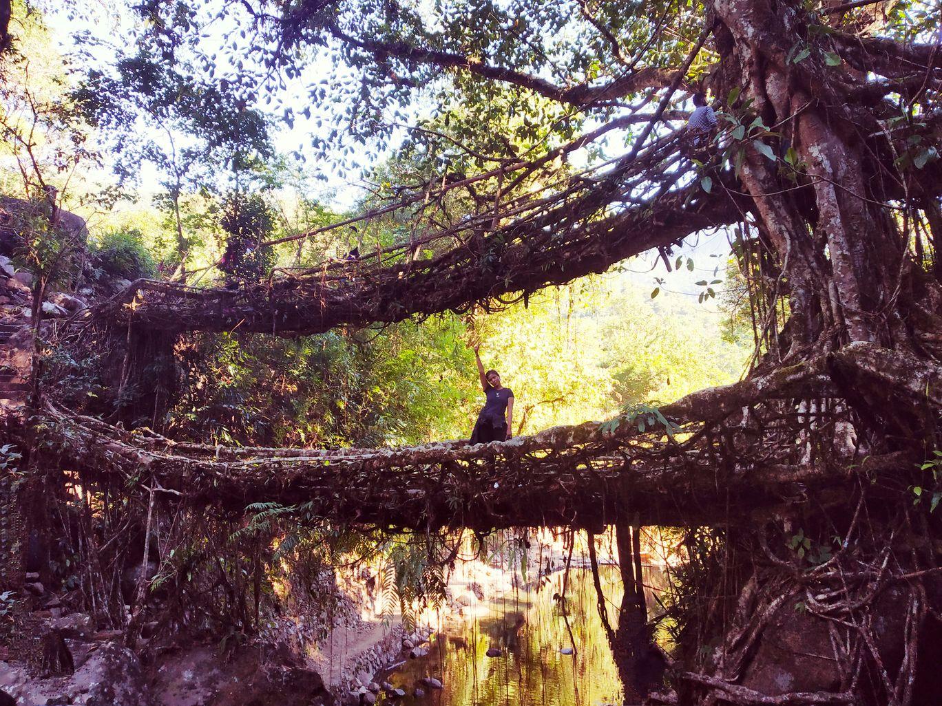 Photo of Jingkieng Nongriat Double Decker Living Root Bridge By Ritika Verma