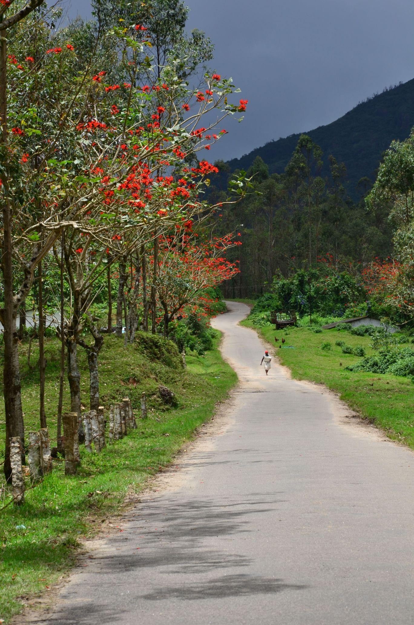Photo of Kerala By Harshavardhan Sappati