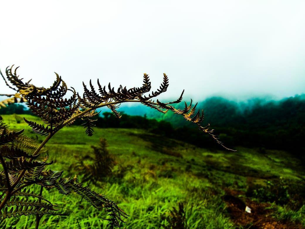 Photo of Kodachadri Hill By Steevan Nicholas